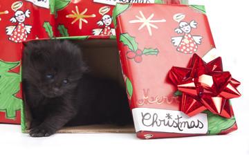 gattino per regalo di natale