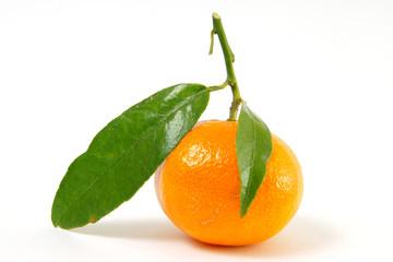 clementinen #7