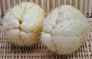 Zucchina spinosa - Chayote (Sechium Edule)