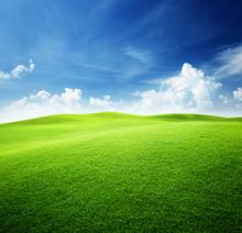 """Постер, картина, фотообои """"green field and blue sky"""""""