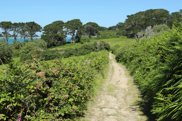 Country lane in St. Mary's Isles of Scilly.