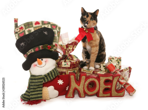 Moggy Christmas Cat