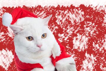 Cartolina gatto di Natale