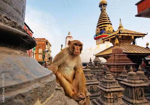 Deurstickers Aap Sitting monkey on swayambhunath stupa in Kathmandu, Nepal