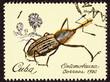 Cuban Postage Stamp Insect Weevil Rhina Oblita Brown Beetle