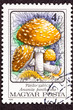 Hungarian Postage Stamp Amanita Pantherina Panther Cap Mushroom