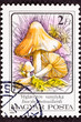 Postage Stamp Inocybe Erubescen/ Patouillardi Poisonous Mushroom