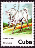 Canceled Cuban Postage Stamp Majestic White Horse Standing in Pa