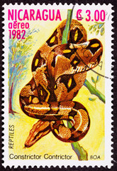 Nicaraguan Postage Stamp Coiled Snake Red Tailed Boa Constrictor