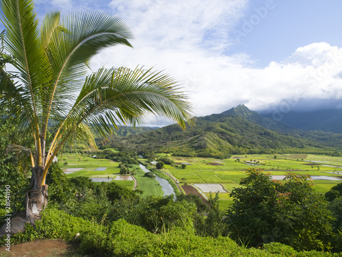 Hanalei Valley Lookout of Kauai Island, Hawaii