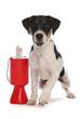 Dog animal charity donation