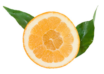 orange segment with green leaves