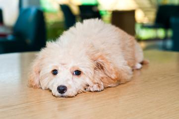 Portrait of a little adorable dog, it humble
