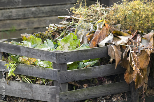 Cabbage leaves on a compost heap