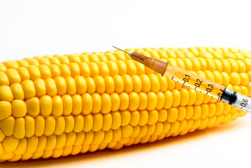 Genetically modified corn