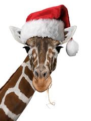 Weihnachtsgiraffe Weiss