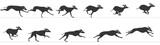 Fototapety Greyhound