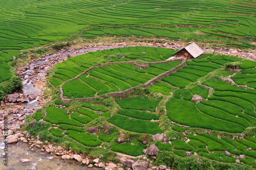 Rice paddy river