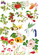 flowers and fruits collection on white