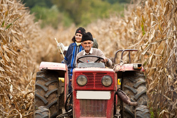 Rural people at corn harvesting