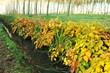 autunno paesaggio 1356