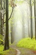 Mountain trail in misty spring forest during rainfall