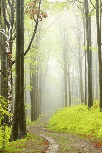 Panel Szklany Mountain trail in misty spring forest during rainfall