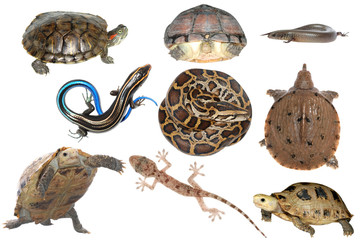 wild animal collection reptile