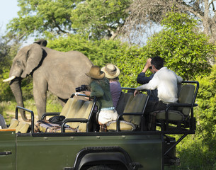 Group of tourists on safari watching elephant