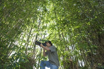 Photographer adjusts camera lens in bamboo forest, low angle view