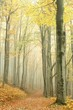 Mountain trail in the misty autumn forest in a nature reserve