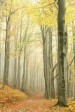 Fototapety Mountain trail in the misty autumn forest in a nature reserve