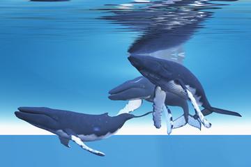 Underwater Whales