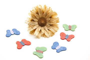 Trockenblume mit Schmetterlinge