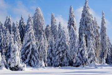 Schnee-Wald