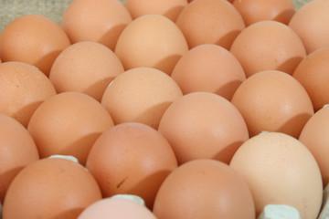 Bio-Hühnereier