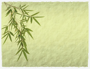 bamboo on antique paper texture