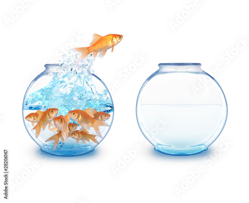 Gold Fish Jumping to Empty Bowl