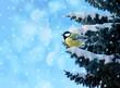 winter card with little bird