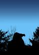 Cougar stalking on blue