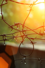 Barbed wire with drops of water in rays of sunshine