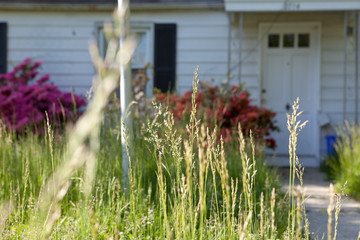 Long Grass Abandoned Cape Cod Single Family Home Maryland USA