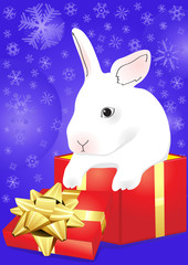 rabbit sitting in the red giftbox