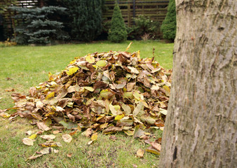 Pile of fallen autumn leaves in garden