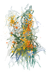 Sea-buckthorn berries. A colorful sketch made by a pen.