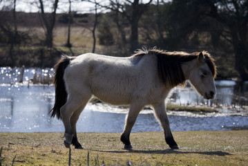 Pony by water