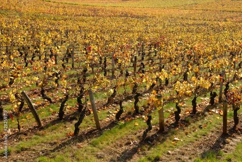 Vignoble de Mercurey, en octobre 01