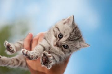 kleines Katzenbaby auf Händen