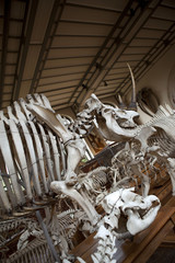 Préhistoire dinosaure os animal museum squelette histoire