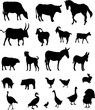 farm animals collection - vector